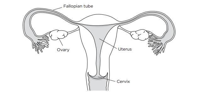 Hysterectomy Cost Delhi
